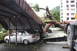 Falling tree crushes cars