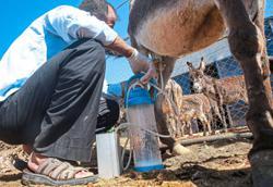 Donkey milk soap soaking up fans in Jordan