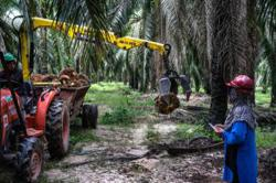 Opimis scheme helps to ease oil palm industry labour shortage