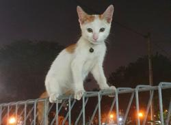 My Pet Story: The kitten who thinks he is a puppy