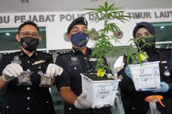 Petrol station manager arrested after police found cannabis plants on balcony