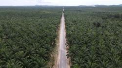 Environmentalists urge extension of Indonesia palm permit moratorium