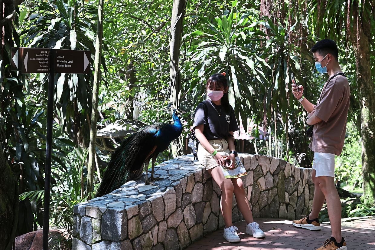 Visitors taking photos with a magnificent peacock.
