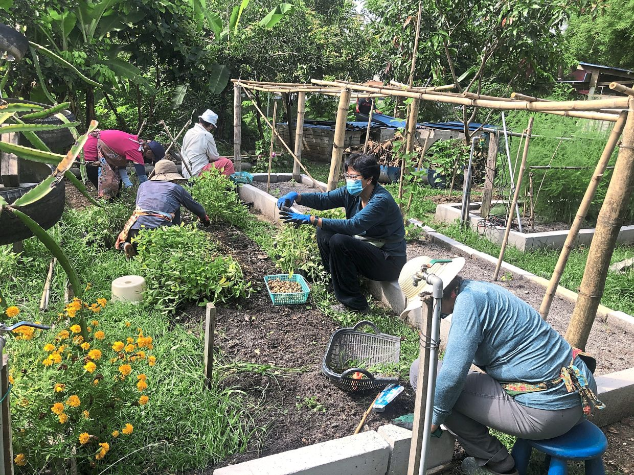 The Taman Tun Dr Ismail project has a vegetable garden and a variety of fruit trees.