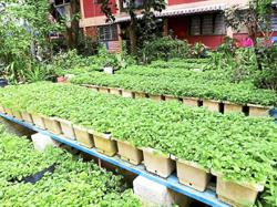 Groups welcome timely urban farming guideline
