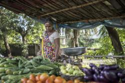 Amazon, Microsoft swoop in on US$24bil India farm-data trove