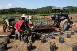 ACCCIM welcomes govt approval to bring in 32,000 foreign workers for plantation sector
