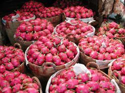 China halts Vietnam's US$1 billion dragon fruit trade over Covid-19 issues
