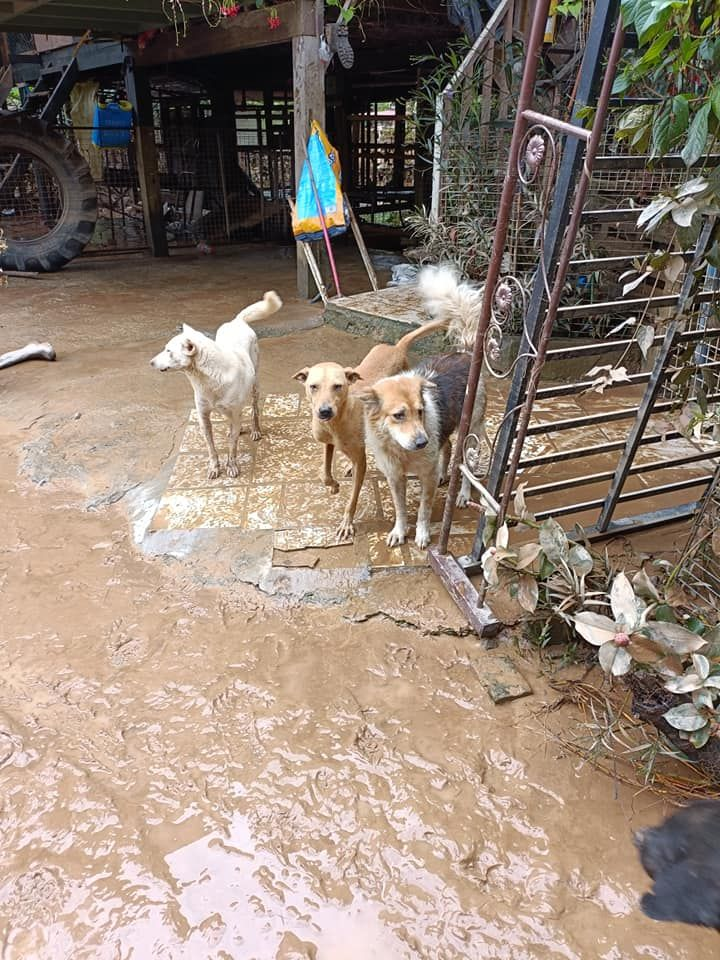 Aftermath of the flood at the shelter.