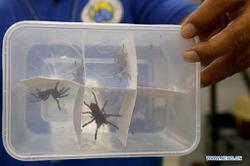 Philippines seizes more than 800 spiders in parcels from Poland; sent via 'snail mail'