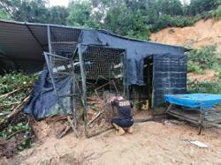 Sabah's recent floods also impacted pets, wildlife