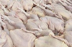 Govt working to find solution to rising chicken price