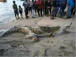 Four meter-long croc likely an 'interstate traveller'
