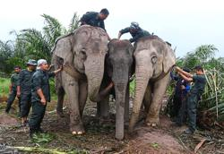 Forest fragmentation causing increase in human-elephant conflicts
