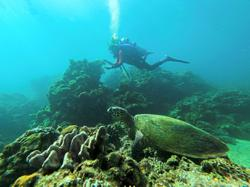 Divers clear trash from coral reef on World Clean-up Day