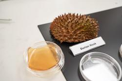 Scientists transform fruit leftovers into antibacterial bandages