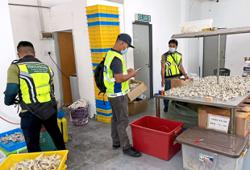 Six arrested for illegal possession of swiftlet nest