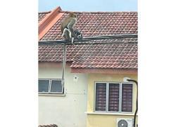 Monkey sees, monkey takes