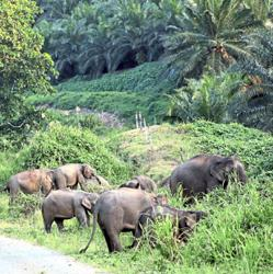 Food sites for elephants in forests