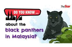 Do you know... about the black panthers in Malaysia?
