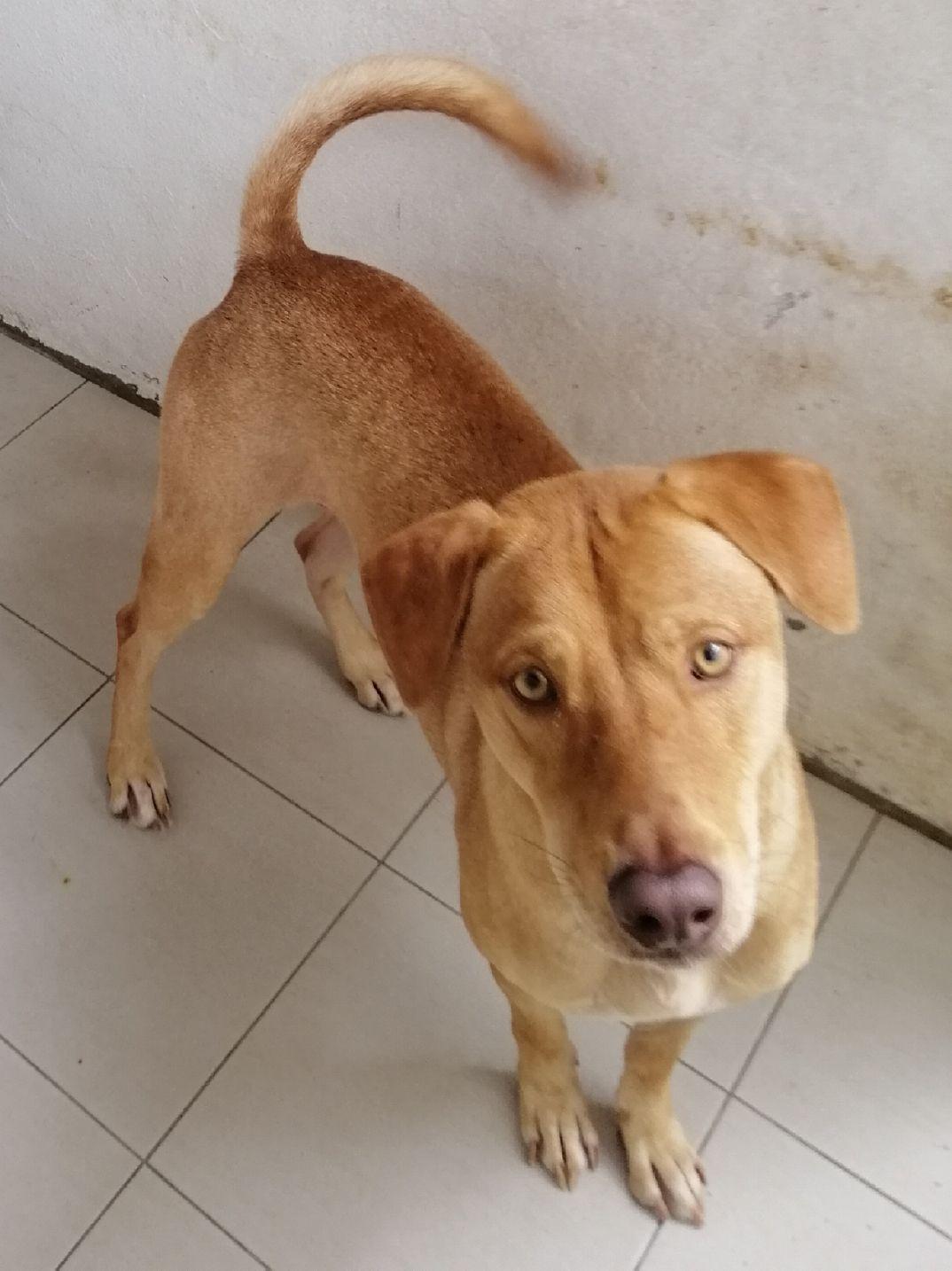 Photo: SPCA Penang/Lily Leng