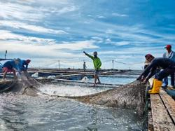 Fish breeders forced to sell on the cheap