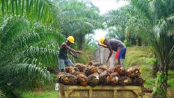 Dorab Mistry: Palm oil may touch US$955 on tight supplies; increase in export levies by top grower Indonesia