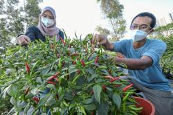 Interest in farming blooms into commercial venture