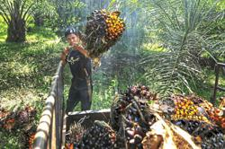 Carbon farming and palm oil
