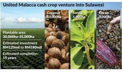 United Malacca to keep riding on high CPO prices