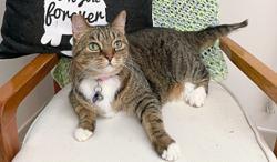 My Pet Story: Fugee, the wonder cat