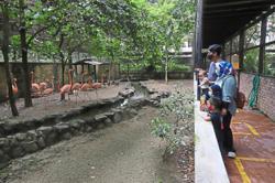Penang Bird Park ready to soar again