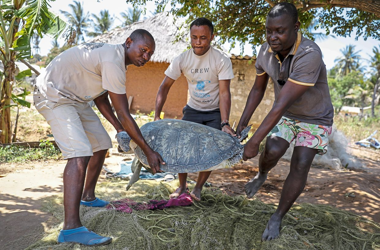 Kiponda (centre) and Wilson Saro (left) carrying a green turtle that was unintentionally caught in the net of fisherman Wilson Randu (right) before releasing it back into the Watamu National Marine Park on the Indian Ocean coast of Kenya.