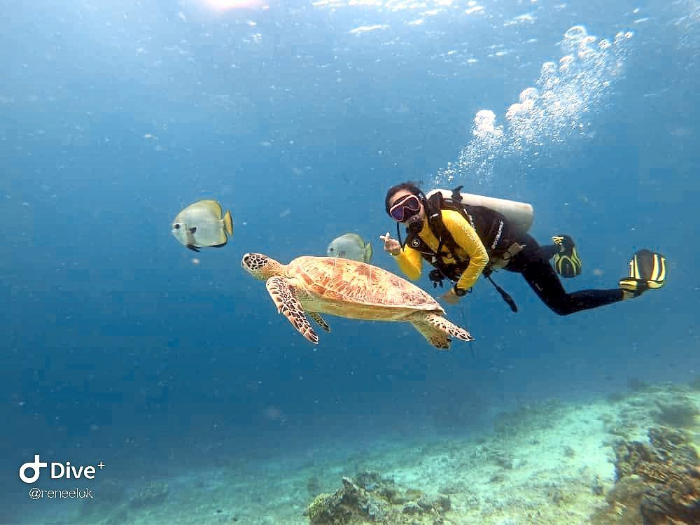 Renee, a beginner diver, was so lucky to get the chance to swim with sea turtles in Sipadan.