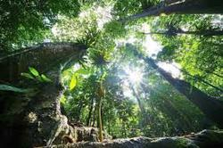 New permanent forest reserve gazetted in Mukim Petaling