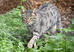 What animal did the cat tussle with?