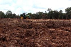 United Nation's deforestation scheme under scrutiny after Indonesia debacle