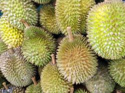 Durian export value grows by RM74.8mil since 2016