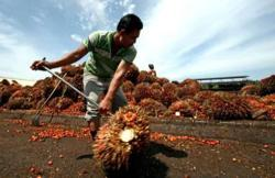 Indonesia plans to eventually stop all crude palm oil exports