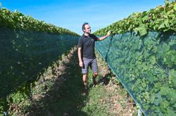 Grapes of change: French wines adapt to global warming