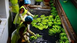 Cambodian agriculture exports near six million tonnes from Jan-Sept 2021