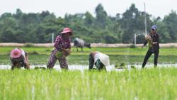 Cambodia marks World Food Day despite Covid-19 pandemic