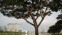 Chinese developer Greenland Holdings' tourism unit sets up Asia-Pacific hub in Singapore