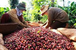 Vietnam September exports down 0.7% m/m at US$27.03 billion; its coffee exports also down by 10.2%