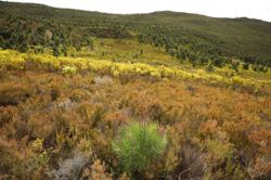 Cape Town fights alien trees threatening its water supply, biodiversity