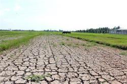 Vietnam: Mekong Delta region faces water shortages, saline intrusion