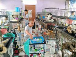Malaysia's largest feline shelter houses 1,500 rescued animals
