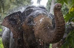 Elephant sanctuary in Kota Tinggi set to welcome visitors in 2025