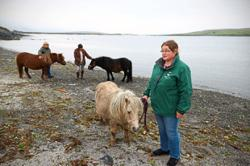 How demand for Shetland ponies went up during the pandemic
