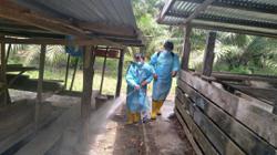 Papar declared African Swine Fever zone